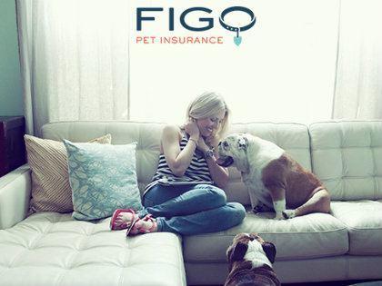 figo-petinsurance